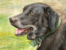 Judas the Black Lab by properprimart