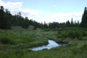 Meadow Stream, Rocky Mountain National Park by PamplemousseCeil