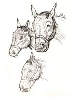 horse sketches by angelac