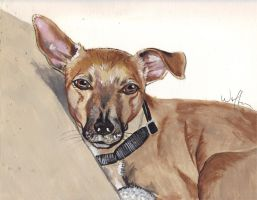Portrait of Jack the Dog by WolfenM