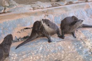 Underwater World : Otters 6 by Aximili-6116
