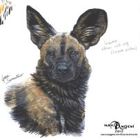 African wild dog 2 by makangeni