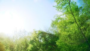 Green Trees with sun by Boulayo