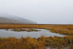 Marsh 11 by prints-of-stock