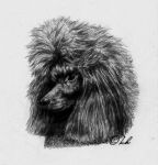 my poodle by Embers