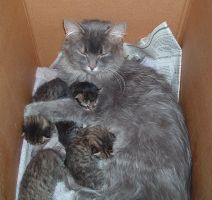 Sleeping Mom Cat and Kittens by Rhabwar-Troll-stock