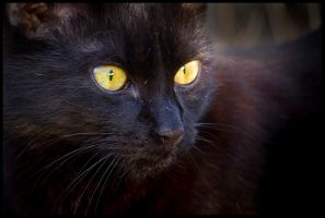 A little panther by Damiano79