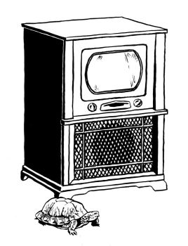Box Turtle and Television by mlauritano