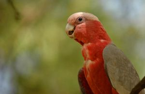 Smiling Parrot by wiltz