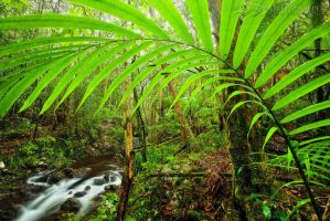 Fern Gully by DrewHopper