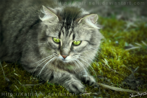 I live in Moss by KatrineH