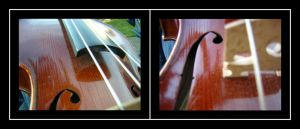 The anatomies of a violin by green-haiku