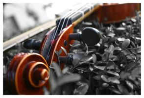 Violin In a sea of grey by torchdesigns