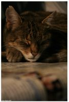 Cats 6 by halogenlampe