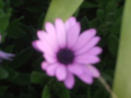 Purple Daisy 2 by jess13795
