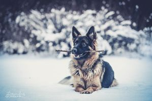 the stick by dubowik