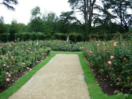 261 - rose garden by WolfC-Stock