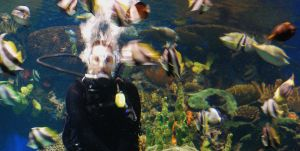 diver surrounded by xthumbtakx
