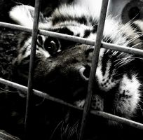 caged by Ceecore