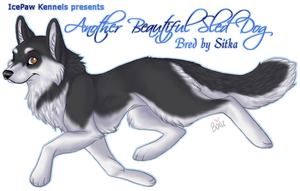 Husky for Sitka by Bonz847
