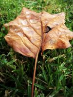 Leaf 3 by VirginiaRoundy
