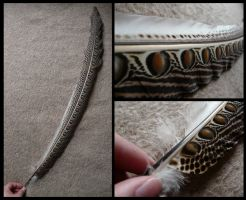 Argus Pheasant Feather by CabinetCuriosities