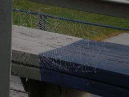 Spider Web 5 by animegrl7979
