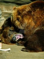 Grizzly Bears Playing Fighting by Elle-Arden