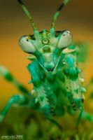 200.Flower mantis by Bullter