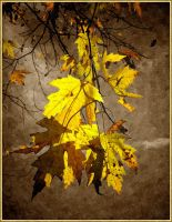 Autumn Photo Painting by Tailgun2009