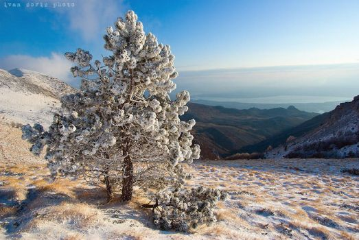 A cold day in the mountain II by ivancoric