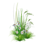 PNG Garden Flowers* by KmyGraphic