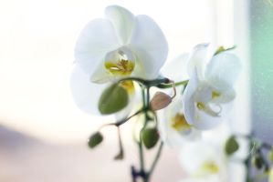 The first attempt to photograph an orchid by Jester-Genso