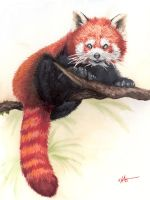 Red Panda by JoyMason