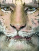 Tiger Face Morph by oboroten