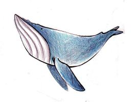 blue whale by rz250