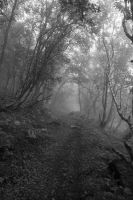 The Dark Road by Photoslick