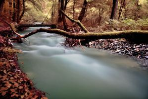 silent creek II by torobala