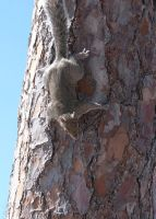 Squirrel 2 by MLeighS