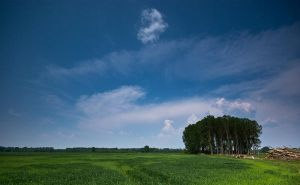 Blue and green by Lepricon-1501