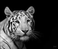 Portrait of a White Tiger by Bliss89