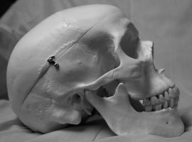 Skull Photo Stock 6 by CcTheMonkey