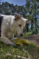 Dog HDR 2 by IDR-DoMiNo
