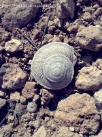 Snail by MaLinx