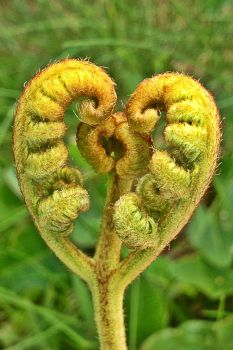 Heart Plant by Nergling