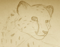 Cheetah Sketch by Daesiy