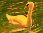 Swan by shanepeters