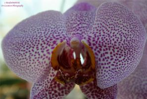 Orchid Show 2011 7 by panda69680102