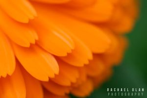 Orange Blossom by Zen-Art-Gallery