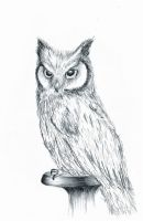 Owl by Andrew-AR